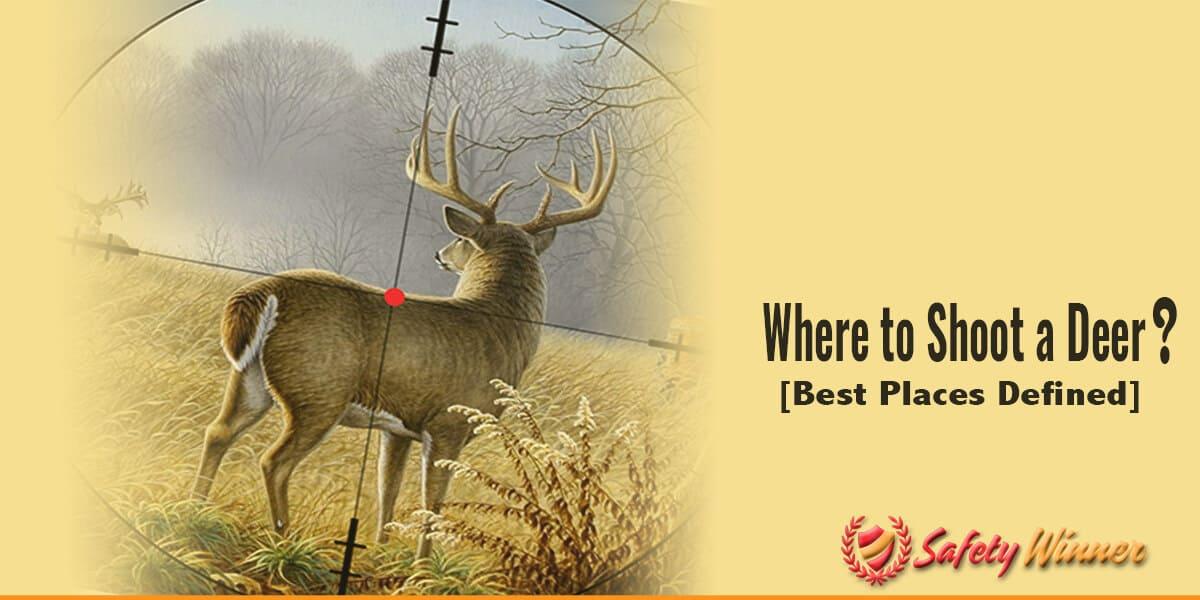 Where to shoot a deer?